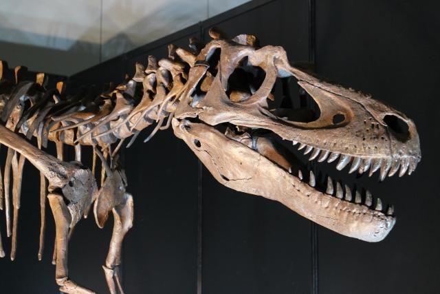福井だけじゃない全国の恐竜展や博物館 イベントやチケットの情報