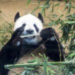 上野動物園の施設情報やパンダのライブカメラとホームページ