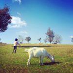 マザー牧場のアクセスや施設情報と割引券