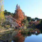 新宿御苑のアクセスや地図と動画で楽しむ桜の花見と紅葉