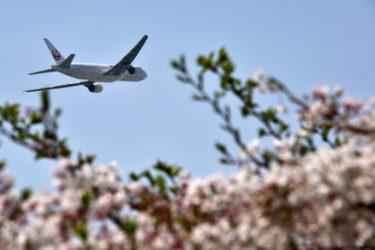 JAL(日本航空)の国際線や国内線と予約方法、気になる機内サービスについて