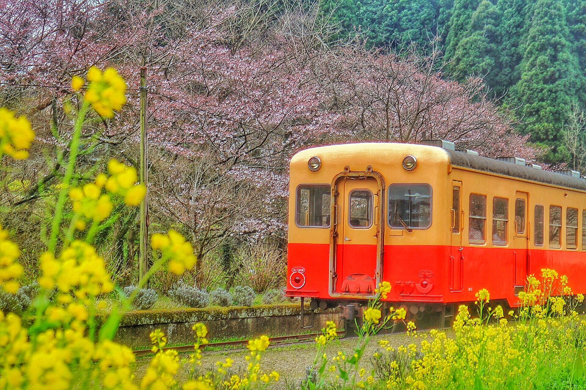小湊鉄道の路線を巡る旅はトロッコ列車だけではなく見どころが満載!