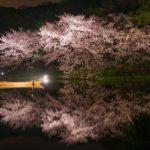 桜の花見の名所や人気スポットとランキング