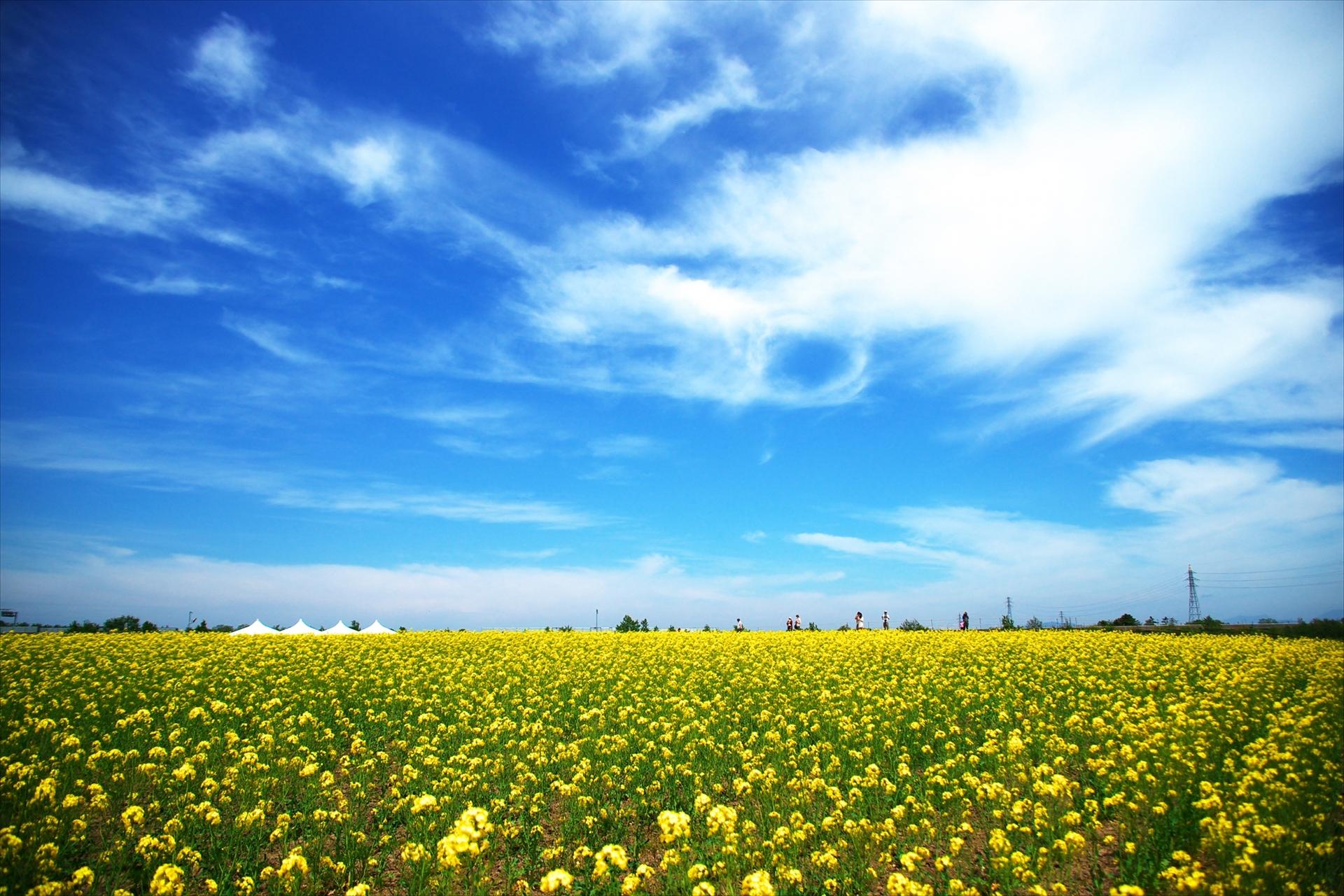 菜の花畑の名所や人気スポット、関東〜関西〜中部〜九州