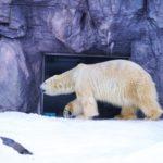 旭山動物園へのアクセスや施設情報と所要時間