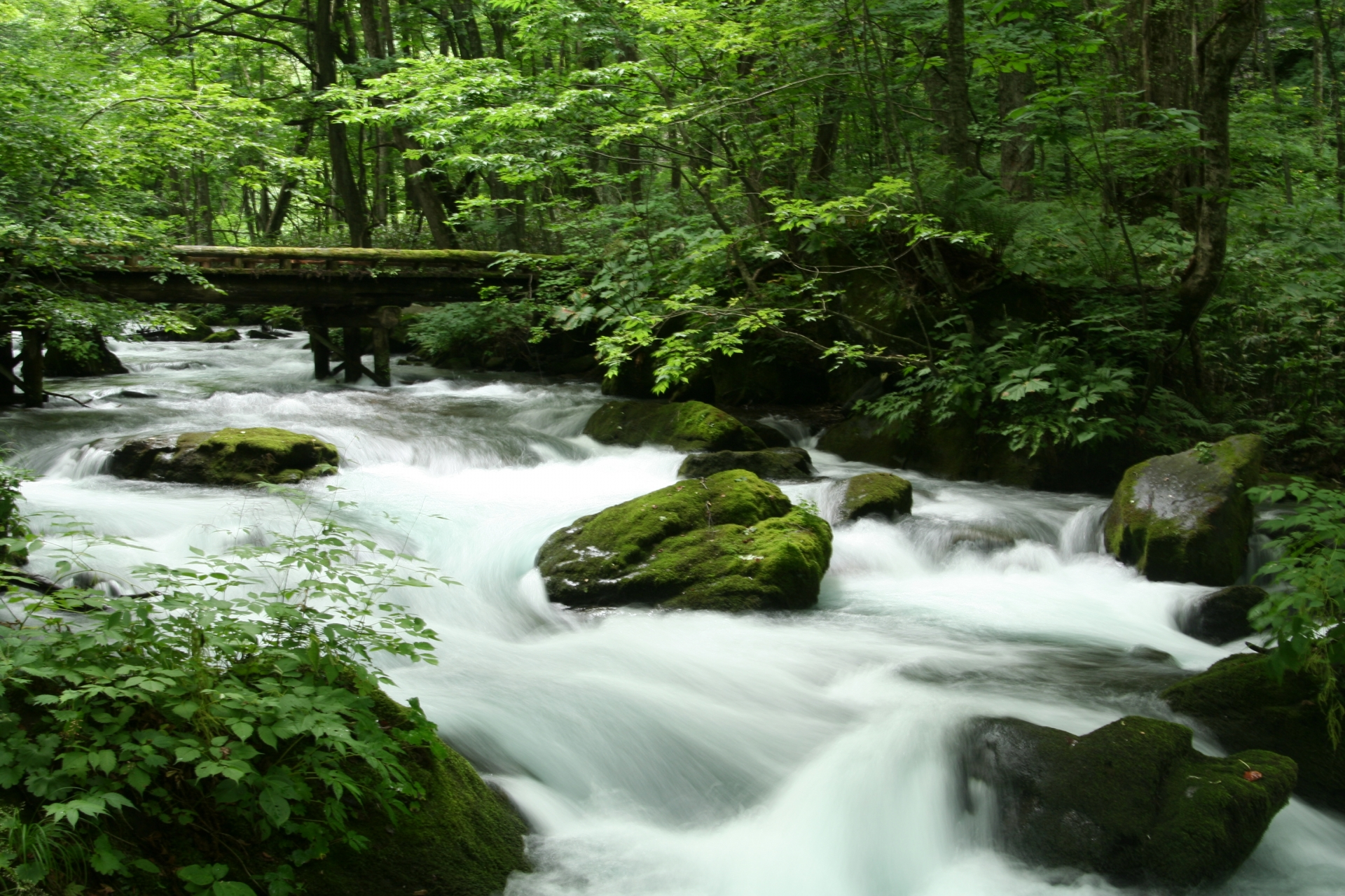 奥入瀬渓流の観光ツアーや散策の所要時間とバス・車でのアクセスや駐車場について