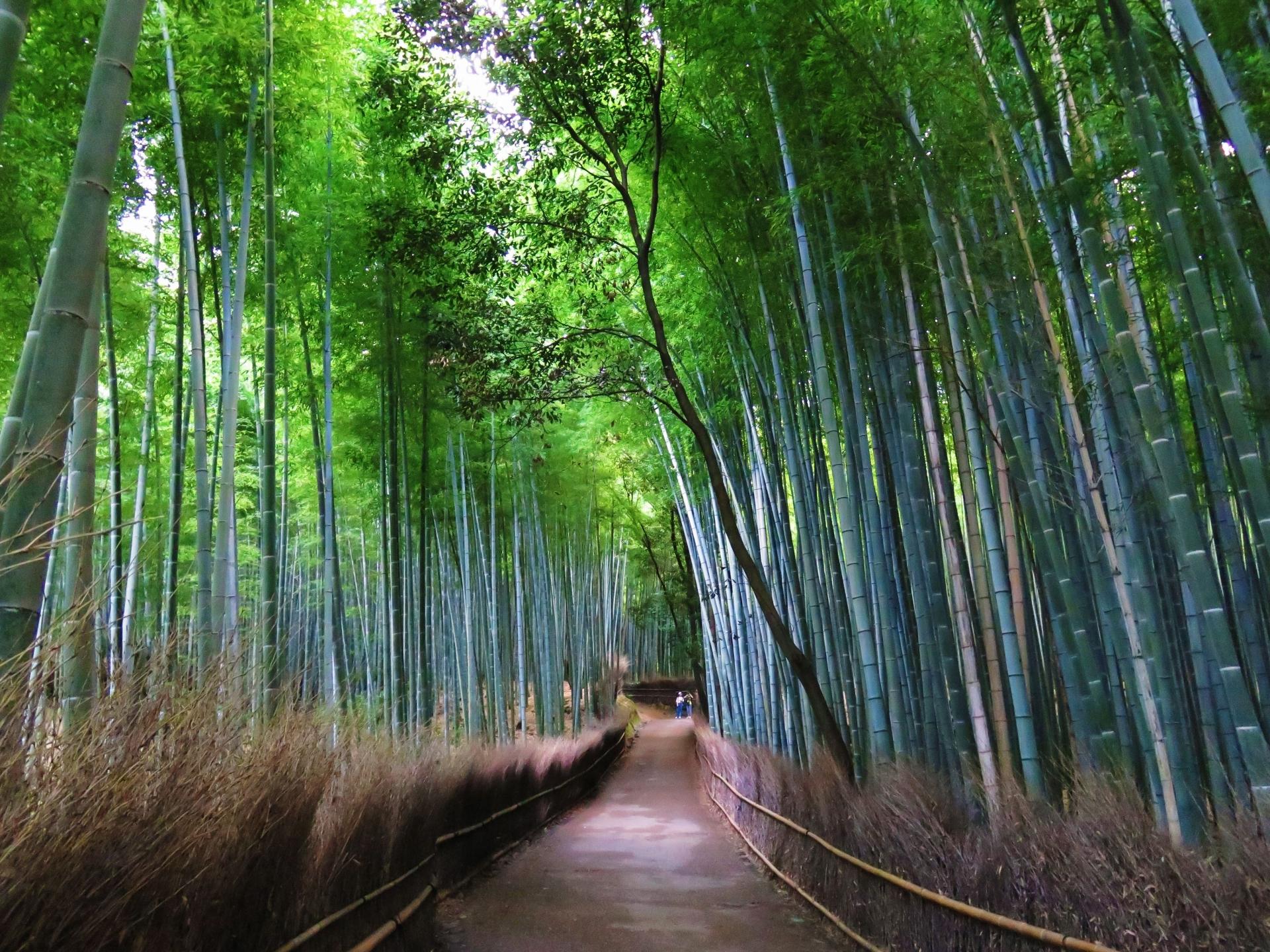 嵯峨野・竹林の道へのアクセスや京都駅からの所要時間や駐車場事情とライトアップ営業時間