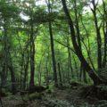 白神山地のアクセスやおすすめの観光スポットやトレッキングコース