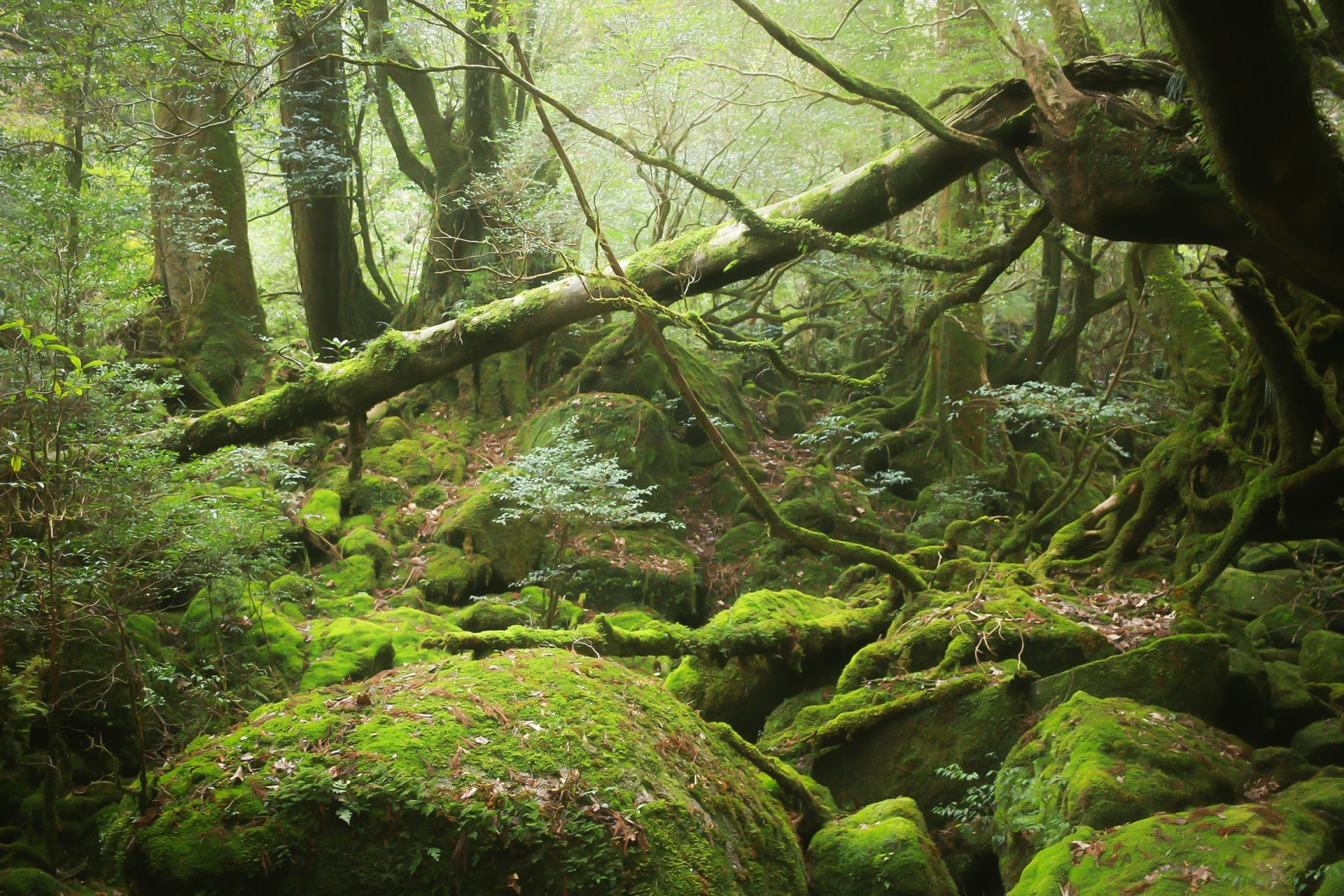 屋久島への行き方(アクセス)や観光マップとベストシーズン