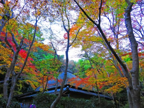祇王寺の紅葉