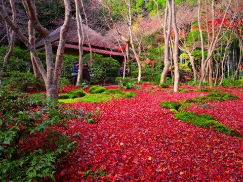 祇王寺の落ち紅葉