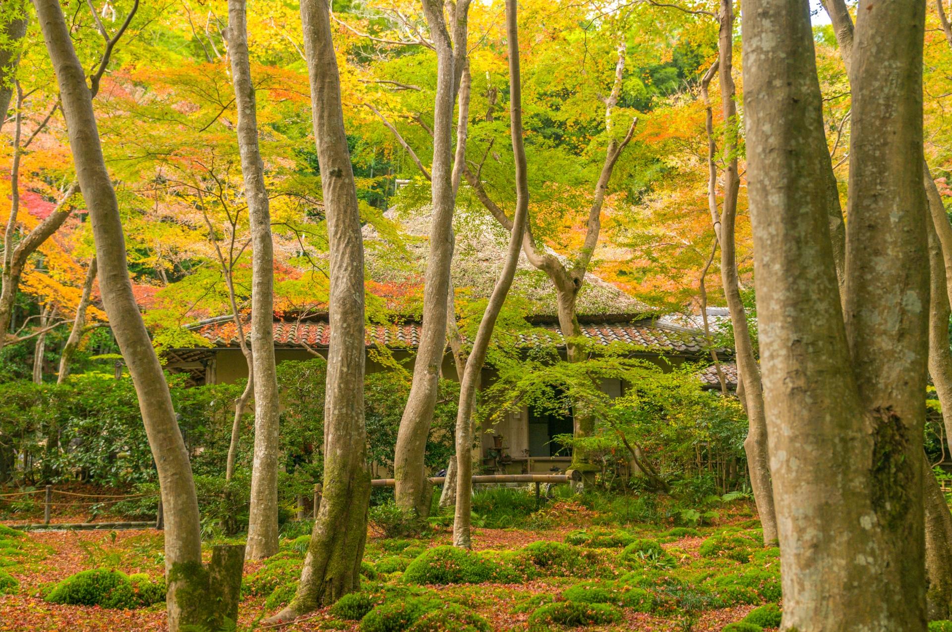 祇王寺の苔や落ち紅葉など見どころやアクセス
