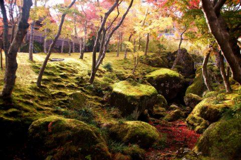 箱根美術館の苔
