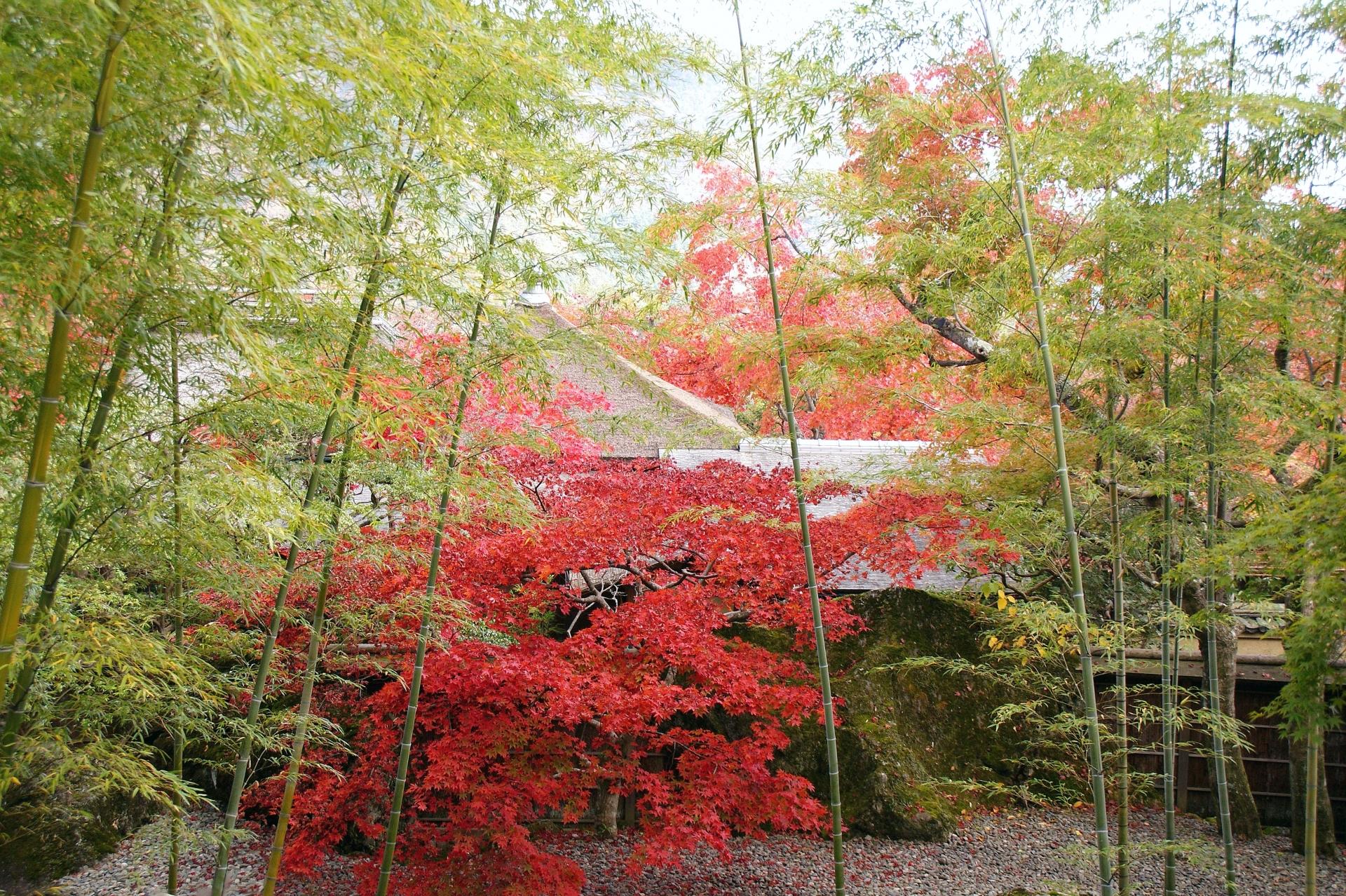 箱根美術館の庭園や苔・紅葉などの見どころとアクセスや施設情報