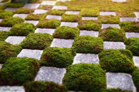 東福寺八相の庭