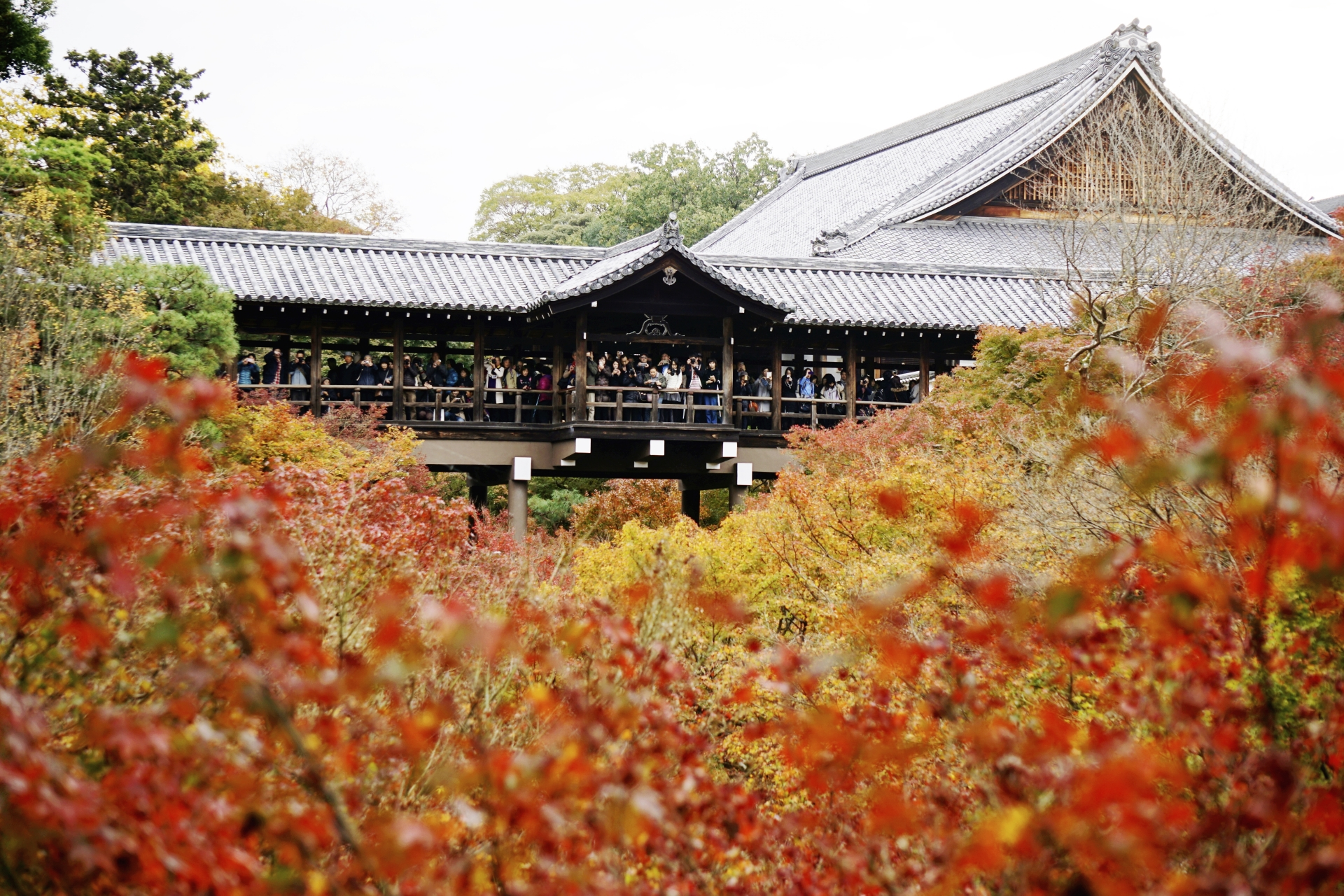 東福寺の庭や紅葉など見どころやアクセス
